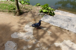 And then this pigeon...
